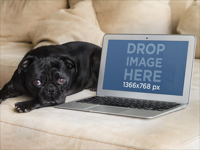 Cute Dog and Macbook Over Couch