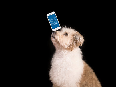 Small Breed Dog Juggling a White iPhone 7 on his Nose Over a Black Background Mockup a12974wide